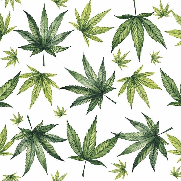 Hemp v Cannabis