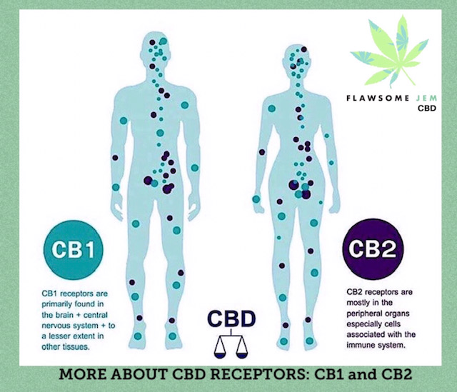 The Endocannabinoid System (ECS)